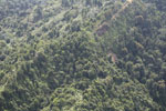 Logged over forest in Borneo -- sabah_aerial_0064
