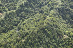 Logged over forest in Borneo -- sabah_aerial_0065