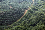 Oil palm plantation and logged over forest in Borneo