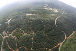 Oil palm plantation in Borneo -- sabah_aerial_0068