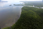 Aerial view of a Borneo mangrove forest