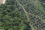 Land being opened for oil palm -- sabah_aerial_0078