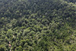 Degraded coastal forest in Borneo