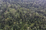 Degraded coastal forest in Borneo -- sabah_aerial_0086