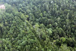 Degraded coastal forest in Borneo -- sabah_aerial_0087