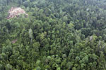 Degraded coastal forest in Borneo -- sabah_aerial_0088