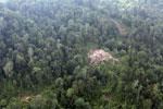 Degraded coastal forest in Borneo -- sabah_aerial_0089