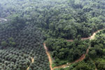 Oil palm plantation and logged over forest in Borneo -- sabah_aerial_0090