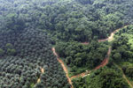 Oil palm plantation and logged over forest in Borneo -- sabah_aerial_0091
