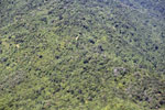 Logged over forest in Borneo -- sabah_aerial_0120
