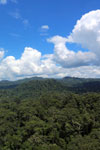 Rainforest in Borneo -- sabah_aerial_0173