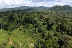 Rainforest in Borneo -- sabah_aerial_0181