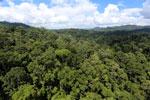 Rainforest in Borneo -- sabah_aerial_0183