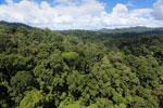 Rainforest in Borneo -- sabah_aerial_0184