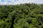 Rainforest in Borneo -- sabah_aerial_0186