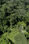 Rainforest in Borneo -- sabah_aerial_0187