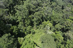 Rainforest in Borneo -- sabah_aerial_0188