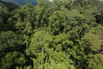 Rainforest in Borneo -- sabah_aerial_0190