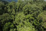 Rainforest in Borneo -- sabah_aerial_0191