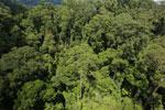 Rainforest in Borneo -- sabah_aerial_0192