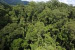 Rainforest in Borneo -- sabah_aerial_0193