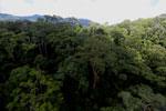 Rainforest in Borneo -- sabah_aerial_0194