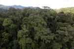 Rainforest in Borneo -- sabah_aerial_0196