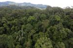 Rainforest in Borneo -- sabah_aerial_0198