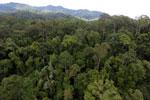 Rainforest in Borneo -- sabah_aerial_0199