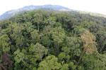 Rainforest in Borneo -- sabah_aerial_0201