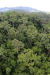 Rainforest in Borneo -- sabah_aerial_0202