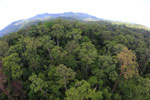 Rainforest in Borneo -- sabah_aerial_0203