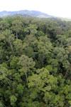 Rainforest in Borneo -- sabah_aerial_0204