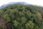 Rainforest in Borneo -- sabah_aerial_0206