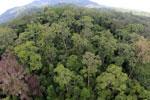 Rainforest in Borneo -- sabah_aerial_0207