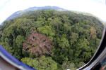 Rainforest in Borneo -- sabah_aerial_0208