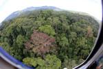 Rainforest in Borneo -- sabah_aerial_0209