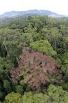 Rainforest in Borneo -- sabah_aerial_0210