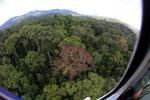 Rainforest in Borneo -- sabah_aerial_0212