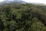 Rainforest in Borneo -- sabah_aerial_0213