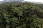 Rainforest in Borneo -- sabah_aerial_0214