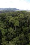 Rainforest in Borneo -- sabah_aerial_0215