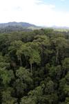 Rainforest in Borneo -- sabah_aerial_0216