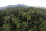 Rainforest in Borneo -- sabah_aerial_0217