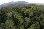 Rainforest in Borneo -- sabah_aerial_0218