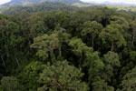 Rainforest in Borneo -- sabah_aerial_0219