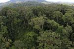Rainforest in Borneo -- sabah_aerial_0220