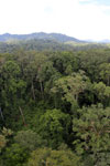 Rainforest in Borneo -- sabah_aerial_0221