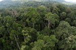Rainforest in Borneo -- sabah_aerial_0222