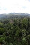 Rainforest in Borneo -- sabah_aerial_0223